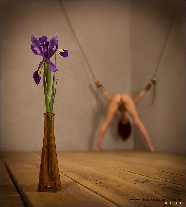 Фиолетовый фокус