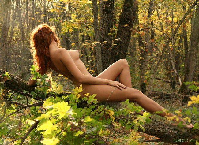 В чаще леса